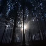 Jesenná krajina - Hmla v lese nad Vrútkami
