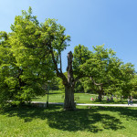 Letná krajina v okolí Smolenického hradu