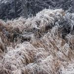 Zimná krajina na Martinských holiach