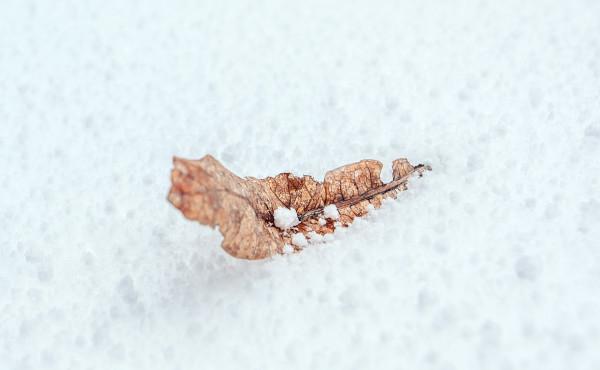 Makro - Zamrznutý detail